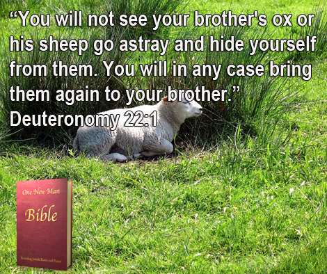 One New Man Daily Word : Deuteronomy 22.1