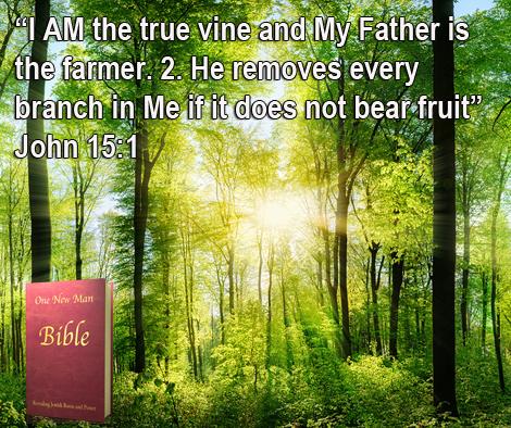 One New Man Daily Word : John 15.1.