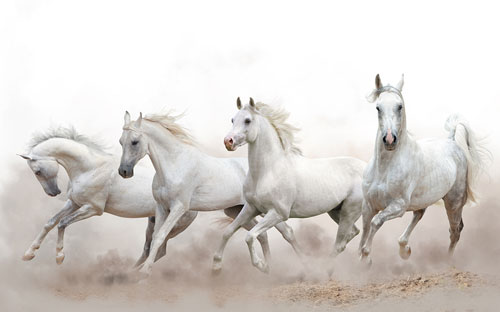 Bible Myth #12: Horses were Hamstrung